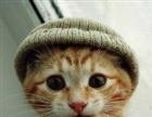 MommyHat's avatar