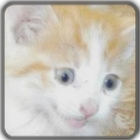 WashedGlass's avatar