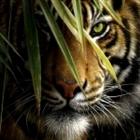 Lisha777's avatar
