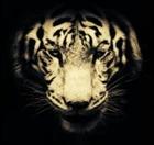 _Siberia_'s avatar