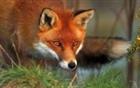 The_Flying_Fox's avatar