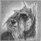Willsg1234's avatar