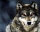 Wolf1557's avatar