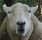 Psyfon's avatar