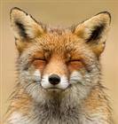 Redeyejedi's avatar