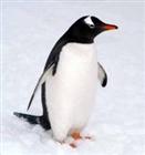 Penguinlover111's avatar