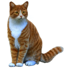 Thecoolpony1212's avatar