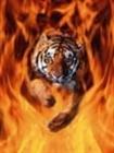 Catsof's avatar