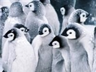 Penguinturtle13's avatar
