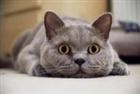 cats1818's avatar