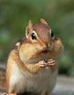 Chipmunk46's avatar