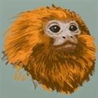 Tamarin's avatar