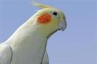bucca2's avatar