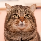 MrDoroh's avatar
