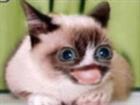 DeemonLordx64's avatar