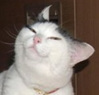 SinisterEndeavor's avatar