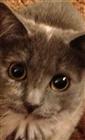 Creeperkru5het's avatar