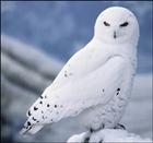 snowyalice's avatar