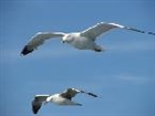 Seagulls's avatar