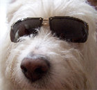 Jazzy's avatar