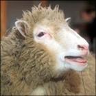 Gormly's avatar