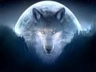 TheGoldenWolf04's avatar