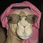 Hippyhero's avatar