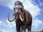 Mammoth84's avatar