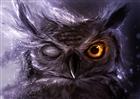 Haxer123's avatar