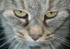 Serophis's avatar