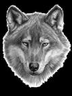 dogman035's avatar