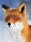 KacperNFS's avatar