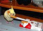 SamsterBirdies's avatar