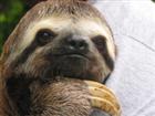 TropicThunder34's avatar