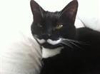Kittens33's avatar
