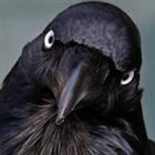 Grinningcrow's avatar