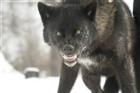 wolffatalis1's avatar