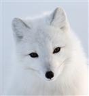 Vizixify's avatar