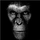 Hairless_Apes's avatar
