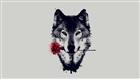 xWolfxOfxShadowsx's avatar