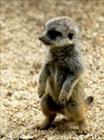 elmeerkat's avatar