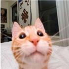 L0usezorz's avatar