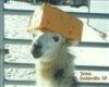 llamallord21's avatar