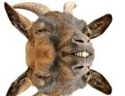 THillis's avatar