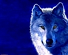 lone_wolf5150's avatar