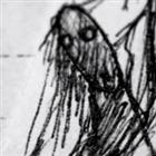 Titaniccreatures's avatar
