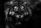 Bugaloo95's avatar