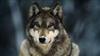 Ne0Wolf7's avatar