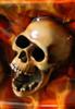 gerbil's avatar