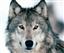 PixsayAngel's avatar